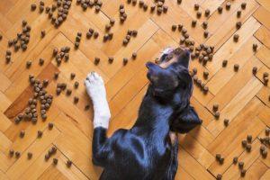 Chien qui mange des croquettes sur le sol
