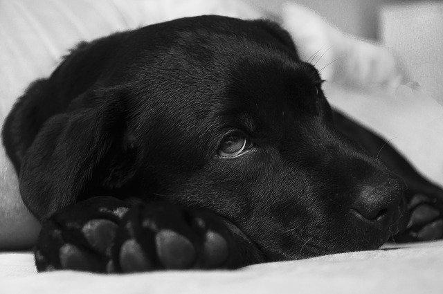 Les signes alarmants que votre chien est malade