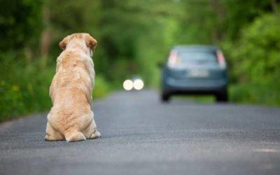 Contre l'abandon des animaux, quelques pistes de réflexion